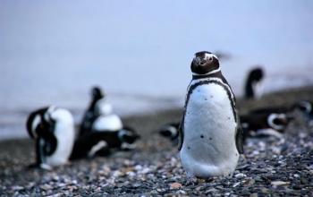 Navegación Pingüinera